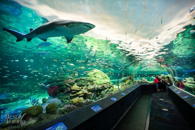 Ripleys-Aquarium-BestofToronto-2013-022.jpg